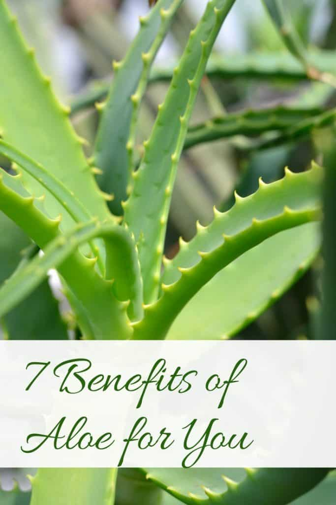 7 Benefits of Aloe for You #digestion #guthealth #aloe #aloevera #healthyliving