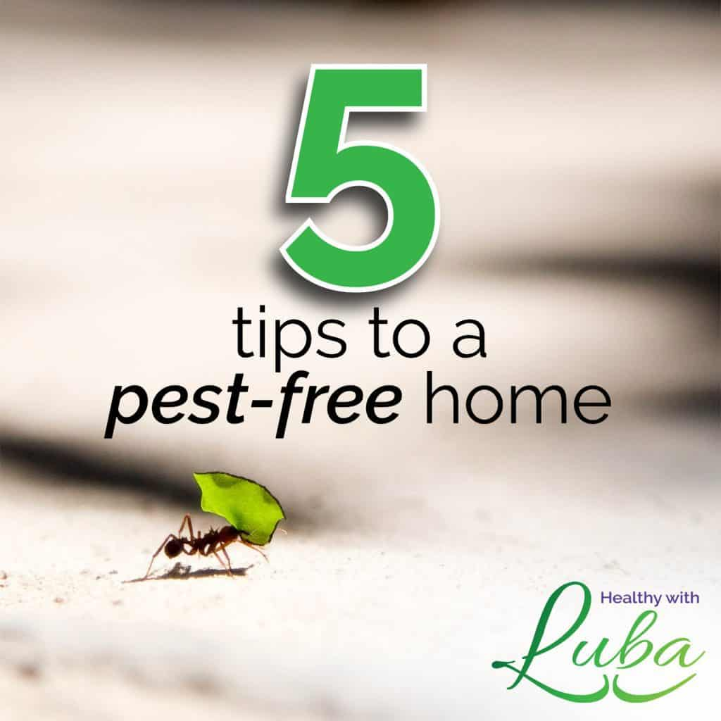 5 Tips to a Pest-Free Home #pests #clean #winterize